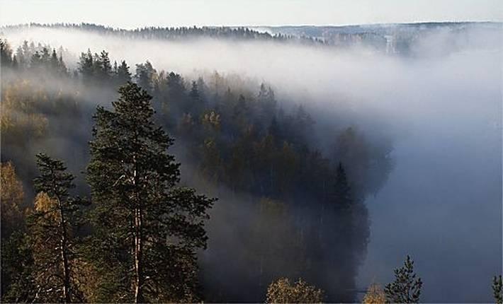Metsä aamusumussa